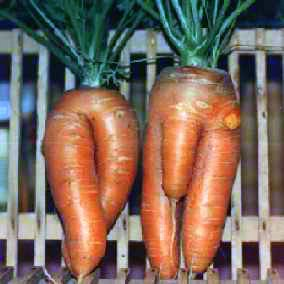 carrot-man-and-woman.jpg